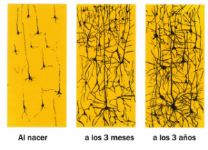 desarrollo red neuronal
