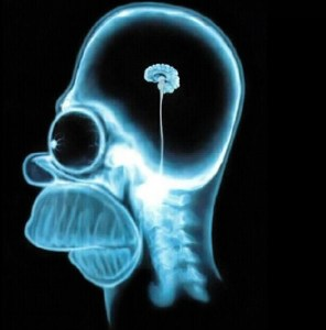 xray-of-homer-simpsons-tiny-brain